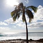 Hawaiian Honeymoon Sweepstakes
