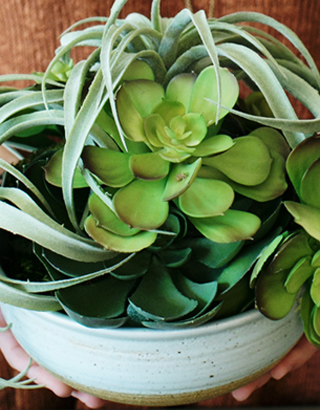 Succulent Centerpiece How-To