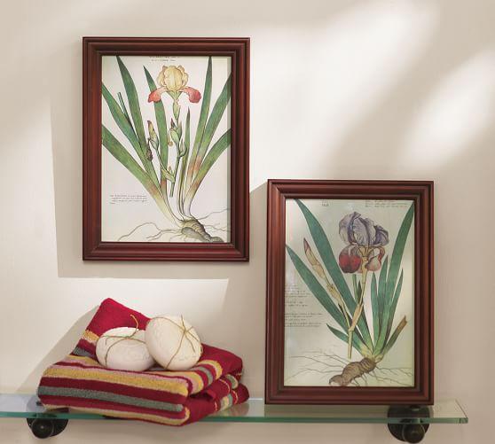 Framed Iris Prints, Set of 2