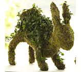 Live Ivy Bunny Topiary, Standing