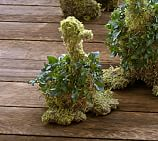 Live Ivy Duckling Topiary, Small