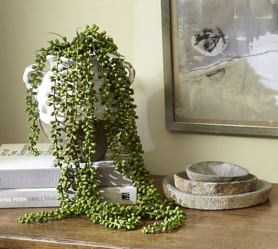 Faux Donkey Tail Trailing Succulent Pottery Barn