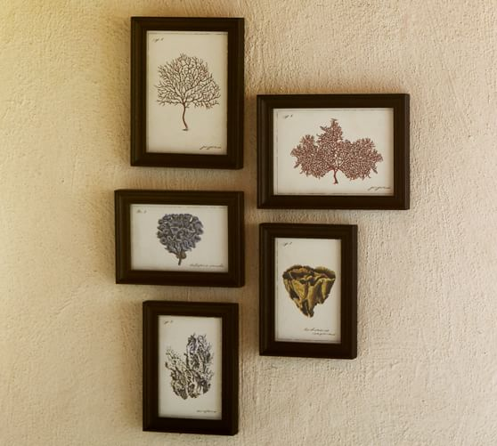 Framed Coral Prints, Set of 5