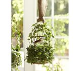 Live Ivy Birdcage, Small 12