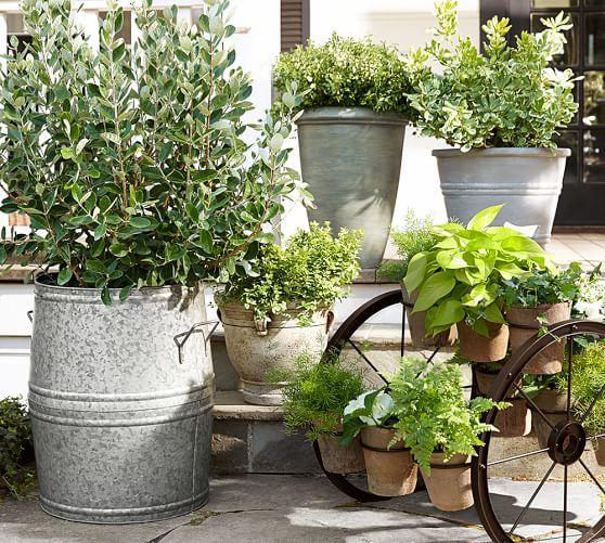 Pottery Barn Planters: Basile Planters