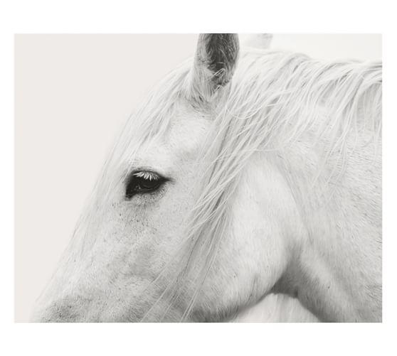 White Horse Framed Print By Jennifer Meyers Pottery Barn