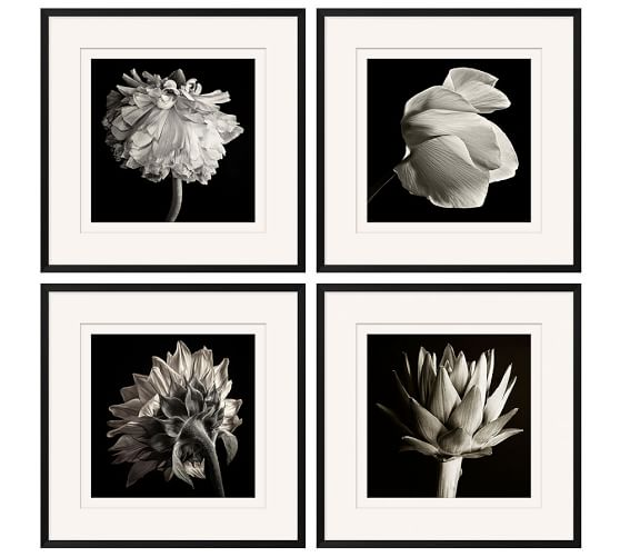 flower black white framed print pottery barn