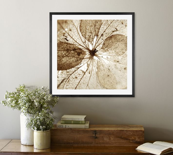 dried hydrangea flower framed print by lupen grainne pottery barn