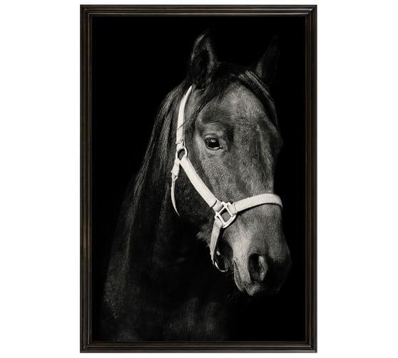 Dark Horse by Jennifer Meyers, 28 x 42
